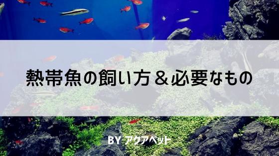 熱帯魚(淡水魚)飼育に必要なもの