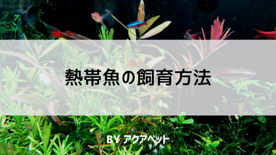 熱帯魚(淡水魚)の飼育方法