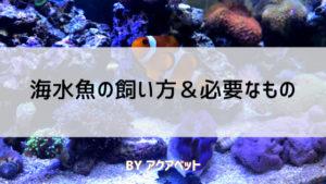 海水魚の飼い方&必要なもの