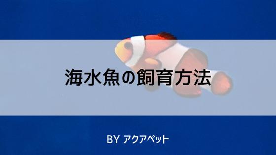 海水魚の飼育方法
