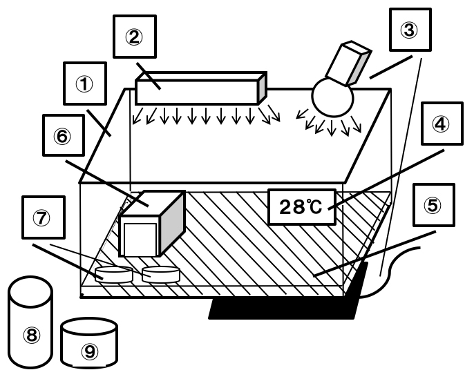 フトアゴヒゲトカゲ飼育図解